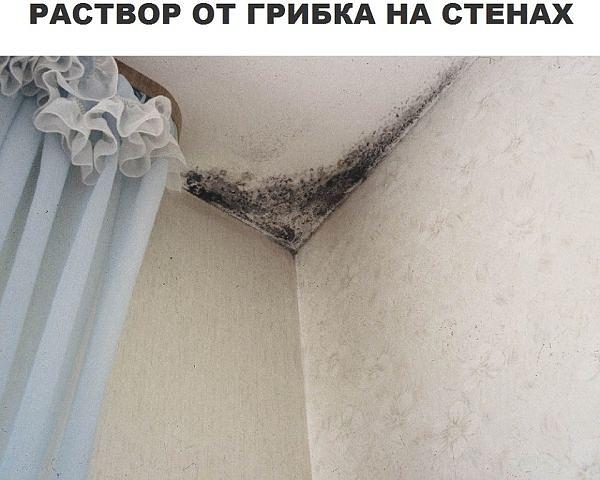 раствор грибка на стенах фото