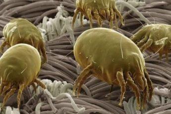 Как избавиться от пылевых клещей? Ты спишь не один!