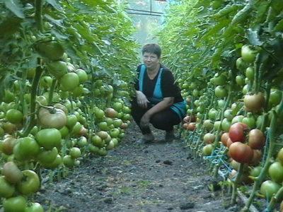 balizam-dlea-pomidor-400x300-1