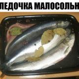 СЕЛЕДОЧКА МАЛОСОЛЬНАЯ