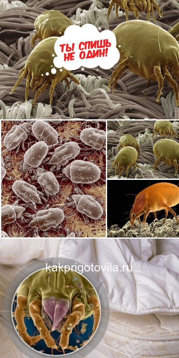 Как избавиться от пылевых клещей? Ты спишь не один