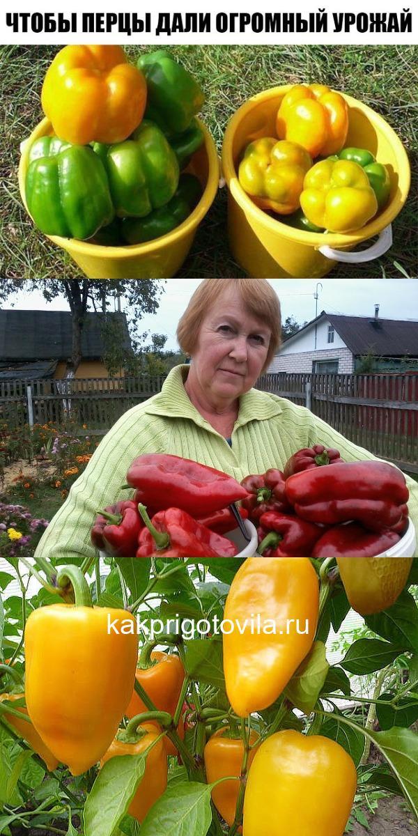 Вот что нужно делать, чтобы перцы не подкачали и дали огромный урожай.