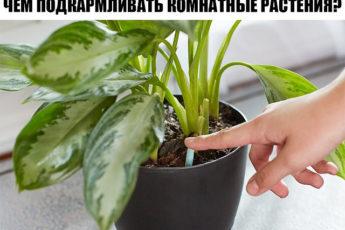 Чем подкармливать комнатные растения?