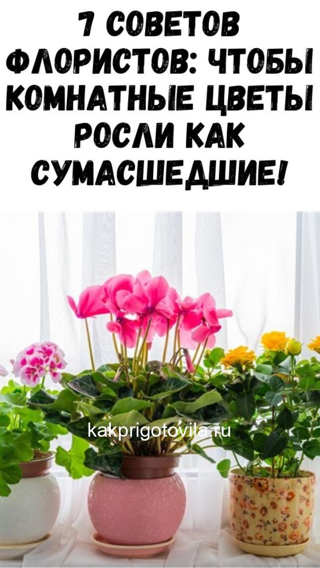 7 советов флористов: чтобы комнатные цветы росли как сумасшедшие!