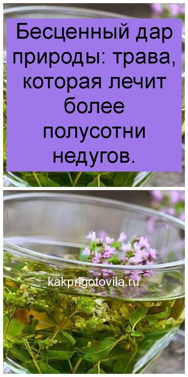 Бесценный дар природы: трава, которая лечит более полусотни недугов 4