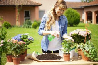 Инструкция: как вырастить розу из срезанного цветка