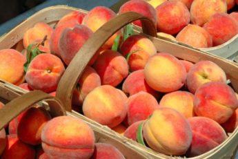 На рынке теперь всегда беру персики «мальчики» — они слаще. Как их отличить