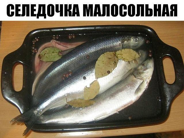 seledka3-1