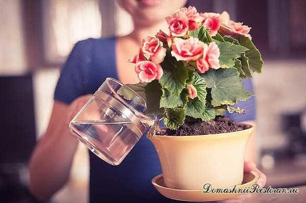 vsego-8-priemov-chto-by-komnatnye-cvety-rosli-kak-na-drozhzhah