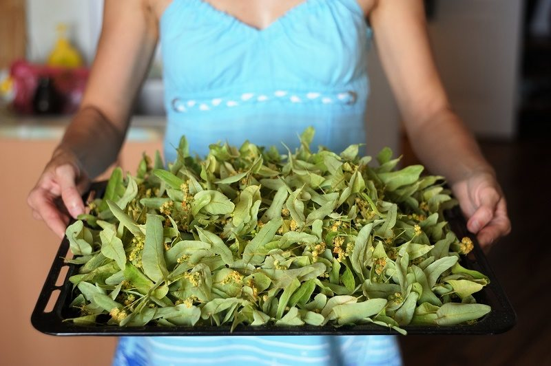 woman-in-blue-holding-tray-of-dried-linden-flowers