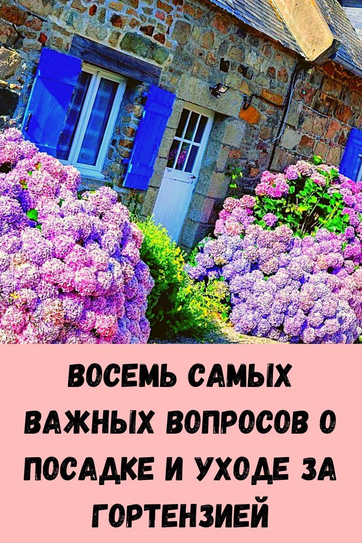 imbirnaya-voda-glavnyy-vrag-zhira-na-bedrah-i-zhivote_-kak-ee-pravilno-prigotovit-14
