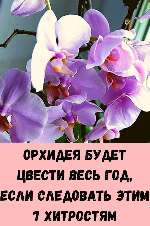 imbirnaya-voda-glavnyy-vrag-zhira-na-bedrah-i-zhivote_-kak-ee-pravilno-prigotovit-16