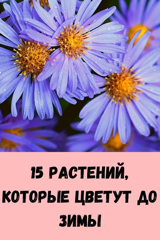 imbirnaya-voda-glavnyy-vrag-zhira-na-bedrah-i-zhivote_-kak-ee-pravilno-prigotovit-9