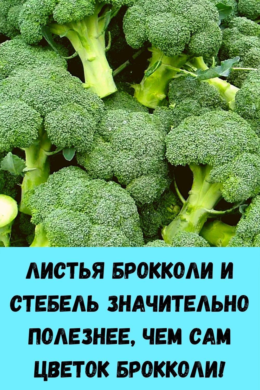 kak-razmnozhit-gortenziyu-cherenkami-poshagovaya-instruktsiya-dlya-novichkov-17