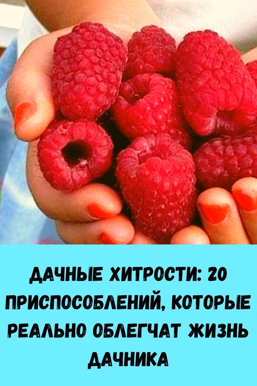 kak-razmnozhit-gortenziyu-cherenkami-poshagovaya-instruktsiya-dlya-novichkov-8