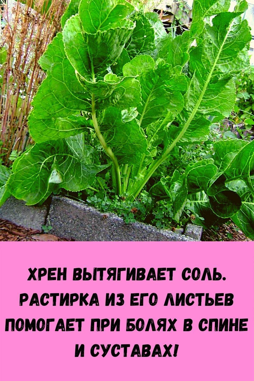 rezhim-priema-vody-dlya-pohudeniya_-po-chasam-i-s-rekomendatsiyami-pey-i-sbrasyvay-ves-7