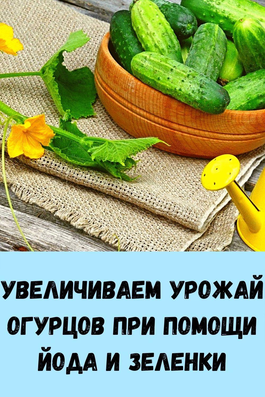 sindrom-venery_-kak-ubrat-zhirovye-podushki-na-bedrah-i-zhivote_-2