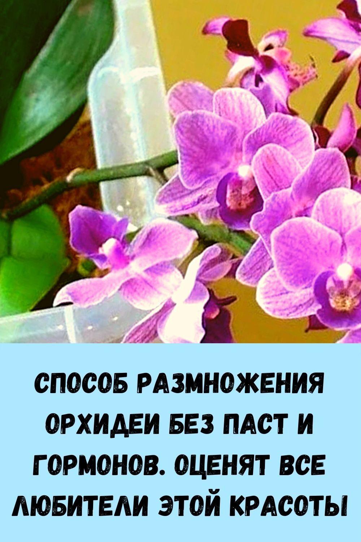 sindrom-venery_-kak-ubrat-zhirovye-podushki-na-bedrah-i-zhivote_-4