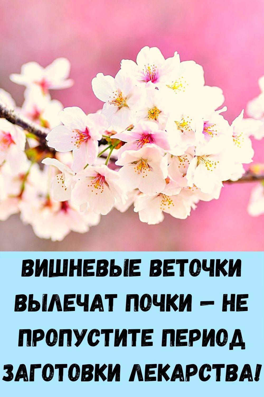 sindrom-venery_-kak-ubrat-zhirovye-podushki-na-bedrah-i-zhivote_-8