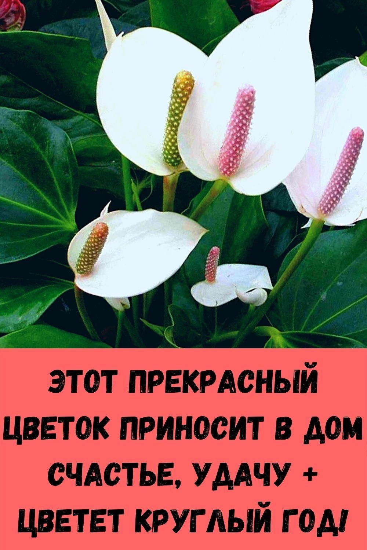 syrnoe-sufle-za-5-minut_-vmesto-nadoevshey-yaichnitsy-i-syrnikov-15