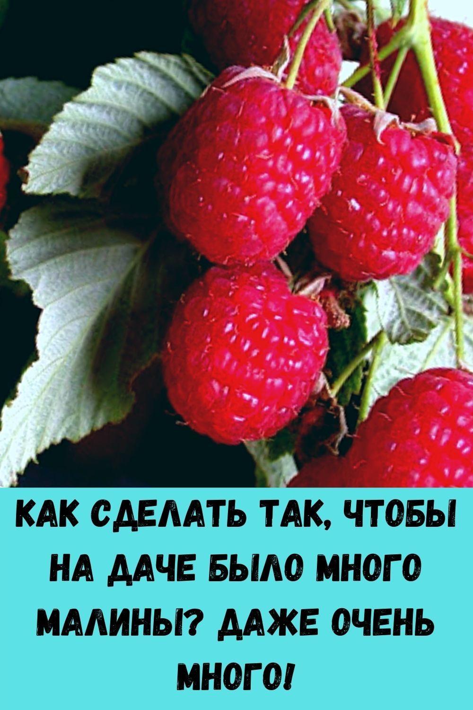 vashi-volosy-budut-tolstymi-krepkimi-i-blestyaschimi-esli-primenyat-eti-5-moschnyh-sredstv-100-uzhe-posle-3-5-primeneniy-2