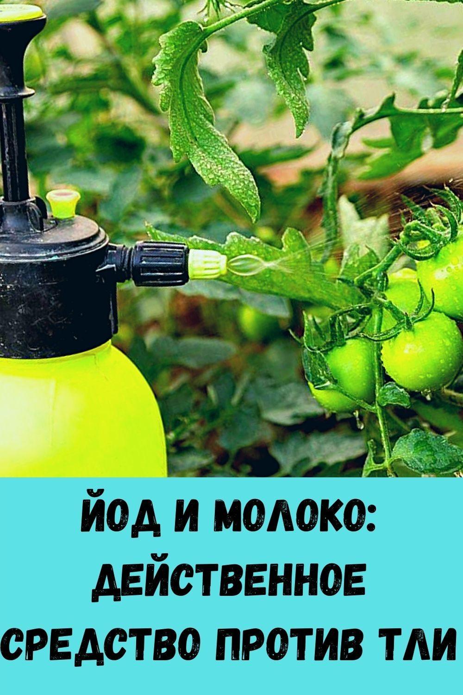 vashi-volosy-budut-tolstymi-krepkimi-i-blestyaschimi-esli-primenyat-eti-5-moschnyh-sredstv-100-uzhe-posle-3-5-primeneniy-9