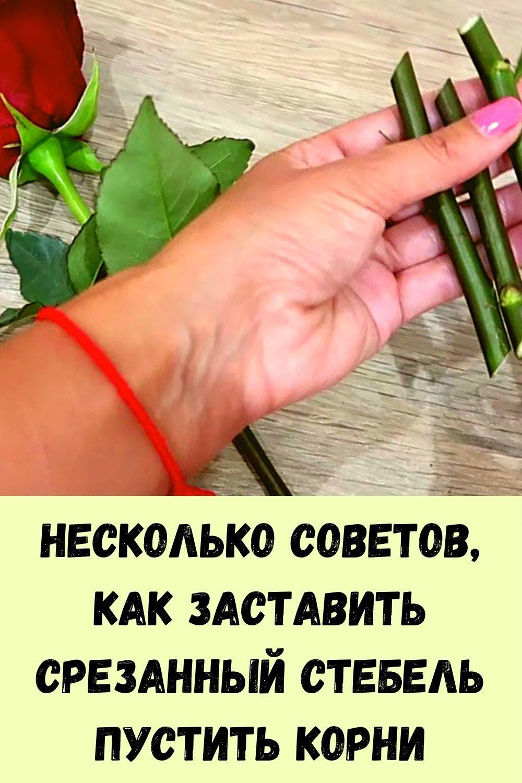 vyklyuchatel-zhirovyh-otlozheniy-14
