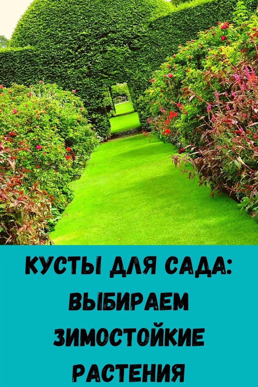 zachem-hranit-lavrovyy-list-v-koshelke_-9
