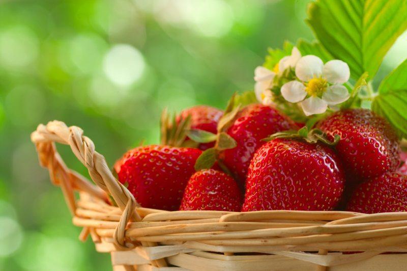 strawberries-in-a-basket-in-the-garden