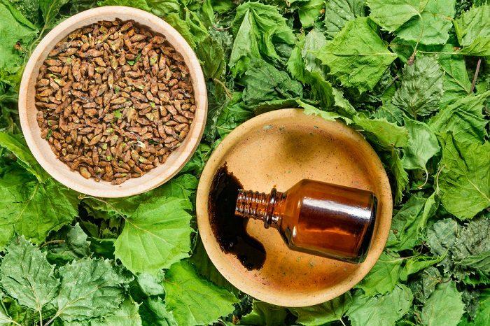 birch-dry-plants-herbal-medicine-phytotherapy-medicinal-herbs