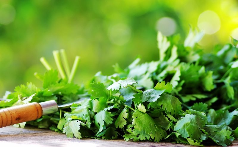 cilantro-herbs-and-knife