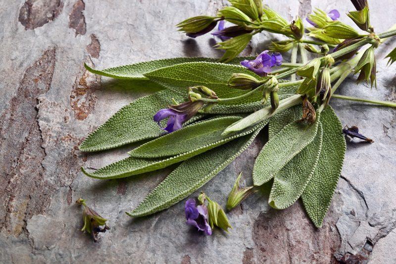 flowering-sage-2