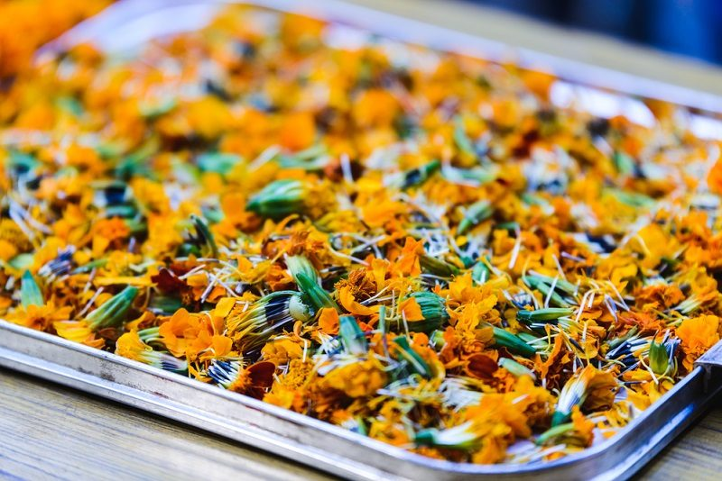 marigolds-in-a-tray-6
