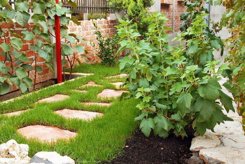 garden-in-home-yard