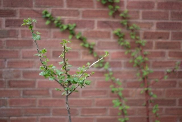 gooseberries_01-640x428-1