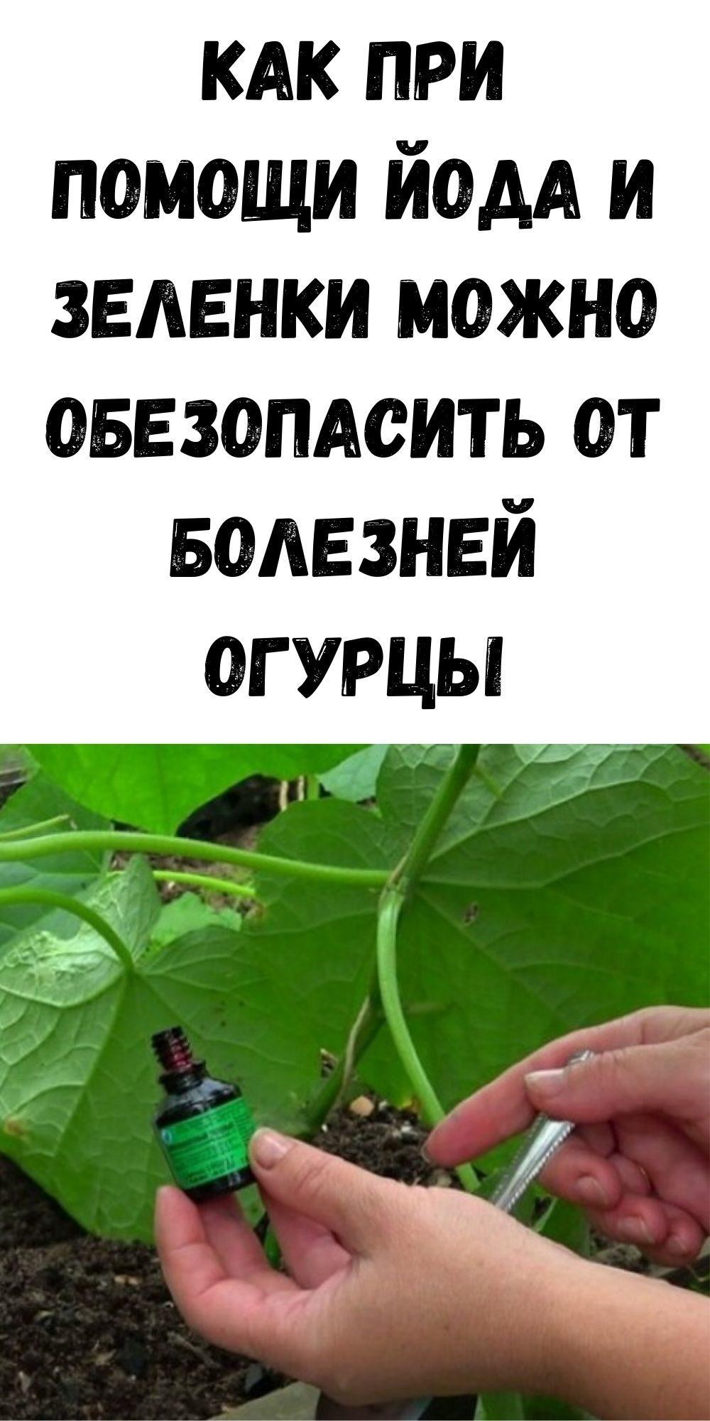 kak-pri-pomoschi-yoda-i-zelenki-mozhno-obezopasit-ot-bolezney-ogurtsy-2