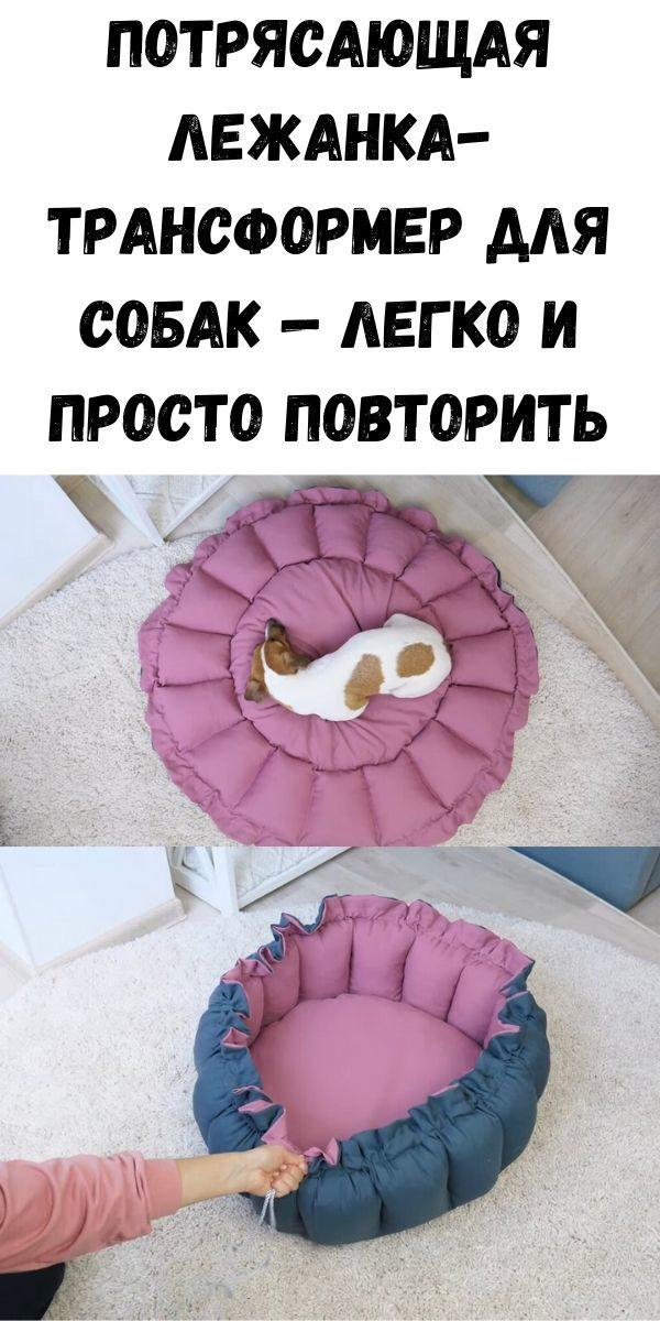 potryasayuschaya-lezhanka-transformer-dlya-sobak-legko-i-prosto-povtorit-2