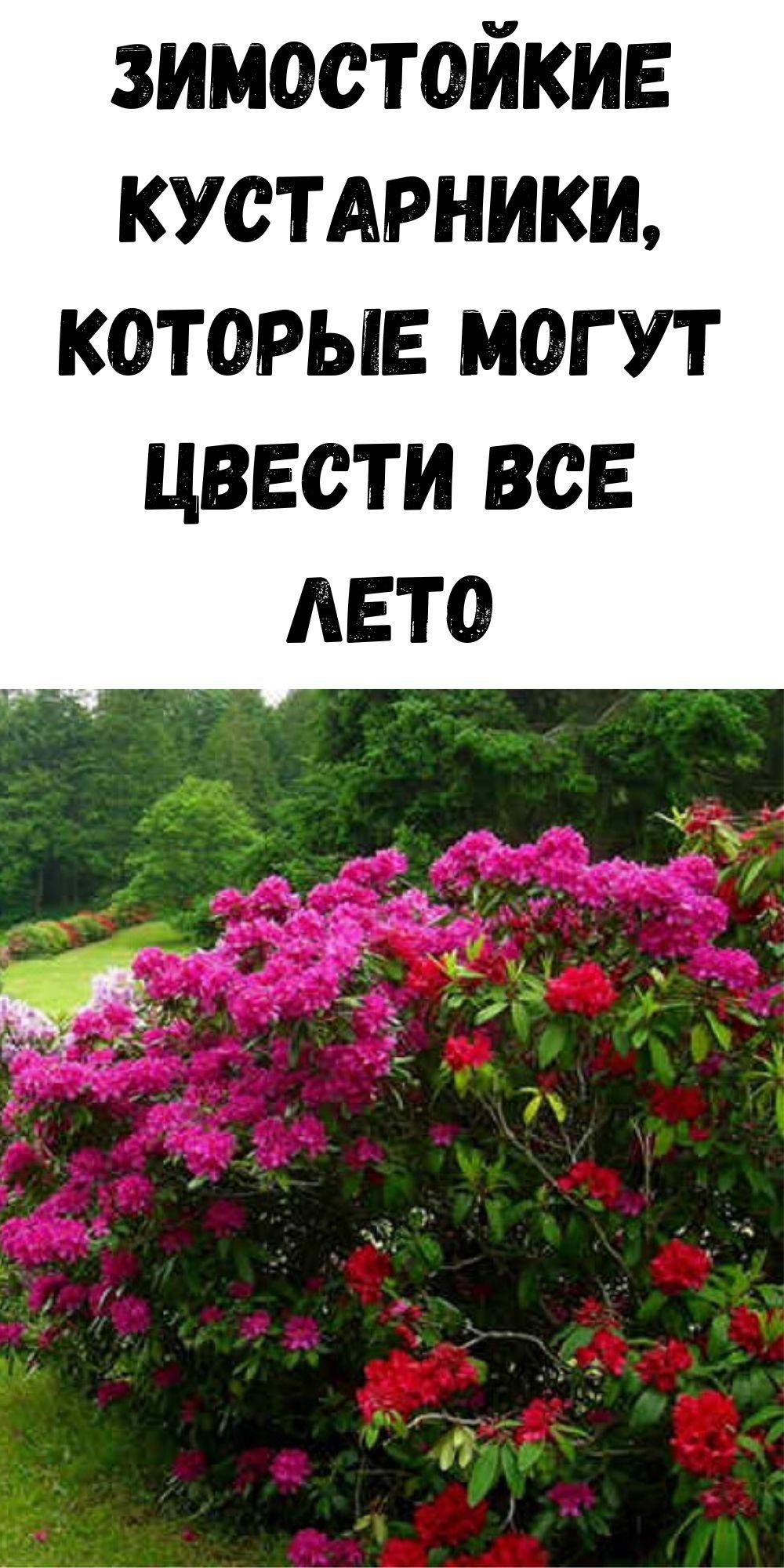 zimostoykie-kustarniki-kotorye-mogut-tsvesti-vse-leto-2